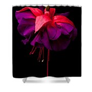 Purple And Pink Beauty Shower Curtain by Dawn OConnor