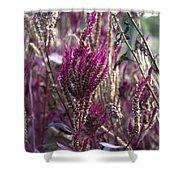 Purple Haze Shower Curtain by Bill Cannon