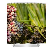 Radishes At The Market Shower Curtain by Heather Applegate