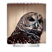 Rain Owl Shower Curtain by LeeAnn McLaneGoetz McLaneGoetzStudioLLCcom