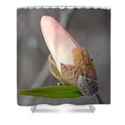 Ready To Unfold Shower Curtain by Lisa Phillips