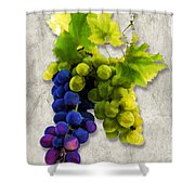 Red And White Grapes Shower Curtain by Elaine Plesser