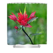 Red Indian Paintbrush Shower Curtain by Lisa Phillips