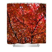 Red Leaves Black Branches Shower Curtain by Rich Franco