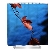 Red Maple Leaves Shower Curtain by Paul Ge