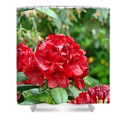 Red Rhododendron Floral Art Prints Rhodies Shower Curtain by Baslee Troutman