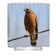Red-shouldered Hawk . 7d10246 Shower Curtain by Wingsdomain Art and Photography