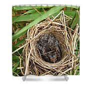Red-winged Blackbird Baby In Nest Shower Curtain by J McCombie