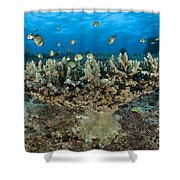 Reticulate Humbugs Gather Under Stone Shower Curtain by Steve Jones