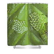 Reticulated Glass Frogs and Eggs Shower Curtain by Michael and Patricia Fogden