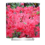 Rhodies Art Prints Pink Rhododendrons Floral Shower Curtain by Baslee Troutman