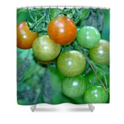 Ripen On The Vine Shower Curtain by Barbara S Nickerson