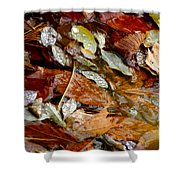 River Leaves Shower Curtain by LeeAnn McLaneGoetz McLaneGoetzStudioLLCcom