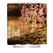 Romance - Sunlight Through Cherry Blossoms Shower Curtain by Vivienne Gucwa