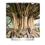 Roots Shower Curtain by Heiko Koehrer-Wagner