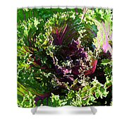 Salad Maker Shower Curtain by Susan Herber