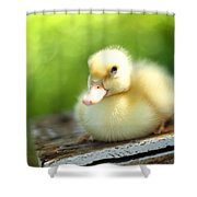 Sally Shower Curtain by Amy Tyler