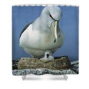 Salvins Albatross Thalassarche Salvini Shower Curtain by Tui De Roy