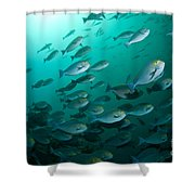 School Of Yellow Masked Surgeonfish Shower Curtain by Mathieu Meur