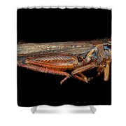 Science - Entomology - The Specimin Shower Curtain by Mike Savad