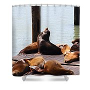 Sea Lions At Pier 39 San Francisco California . 7d14314 Shower Curtain by Wingsdomain Art and Photography
