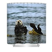 Sea Otter Enhydra Lutris Wrapped Shower Curtain by Konrad Wothe