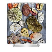 Sea Treasures Shower Curtain by Elena Elisseeva