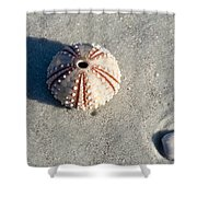 Sea Urchin And Shell Shower Curtain by Kenneth Albin