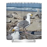 Seagull Bird Art Prints Coastal Beach Bandon Shower Curtain by Baslee Troutman