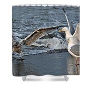 Seagull Treasures Shower Curtain by Debra  Miller