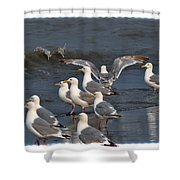 Seagulls Gathering Shower Curtain by Debra  Miller