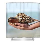 Seashell In Hand Shower Curtain by Elena Elisseeva