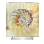 Seashell. Light Version Shower Curtain by Jenny Rainbow