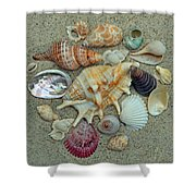Shell Collection 2 Shower Curtain by Sandi OReilly