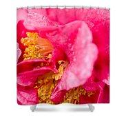 Shy Camellia Shower Curtain by Rich Franco