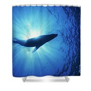Silhouette Of A Sea Lion, La Paz Shower Curtain by Beverly Factor