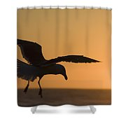Silhouette Of A Seagull In Flight At Shower Curtain by Michael Interisano