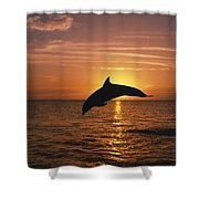 Silhouette Of Leaping Bottlenose Shower Curtain by Natural Selection Craig Tuttle