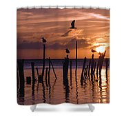 Silhouette Of Seagulls On Posts In Sea Shower Curtain by Axiom Photographic