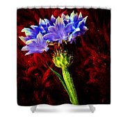 Single Bachelor  Shower Curtain by Chris Berry