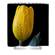Single Yellow Tulip Shower Curtain by Garry Gay