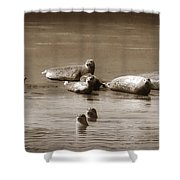 Smile Pretty For The Camera Shower Curtain by Donna Blackhall