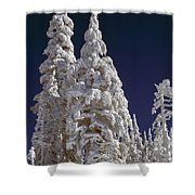 Snow-covered Pine Trees On Mount Hood Shower Curtain by Natural Selection Craig Tuttle