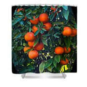 So Sweet Shower Curtain by Robert Bales