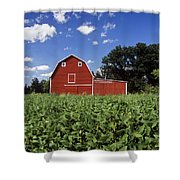 Soybean Field And Red Barn Near Anola Shower Curtain by Dave Reede