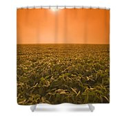 Soybean Field On A Misty Morning Shower Curtain by Dave Reede