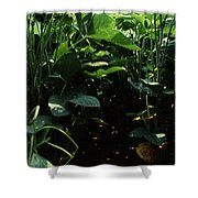 Soybean Leaves Shower Curtain by Photo Researchers