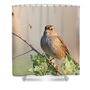 Sparrow Bird Perched . 40D12304 Shower Curtain by Wingsdomain Art and Photography