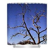 Spooky Tree Shower Curtain by Larry Ricker
