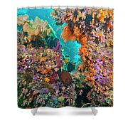 Spotted Goldring Surgeonfish And Coral Shower Curtain by Beverly Factor